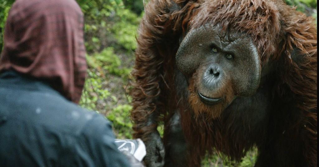 Apes 5